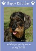 "Miniature Wire Haired Dachshund-Happy Birthday - ""Are You Really THAT Old"" Theme"